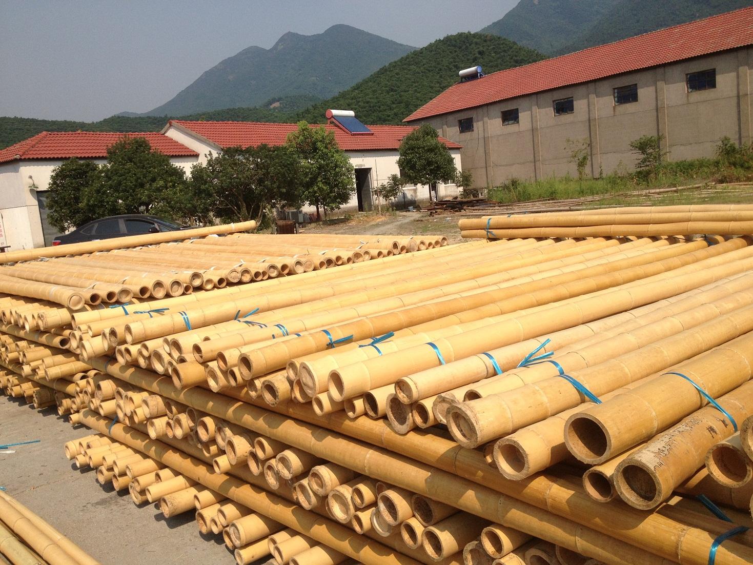 Moso Bamboo Chi Bamboo